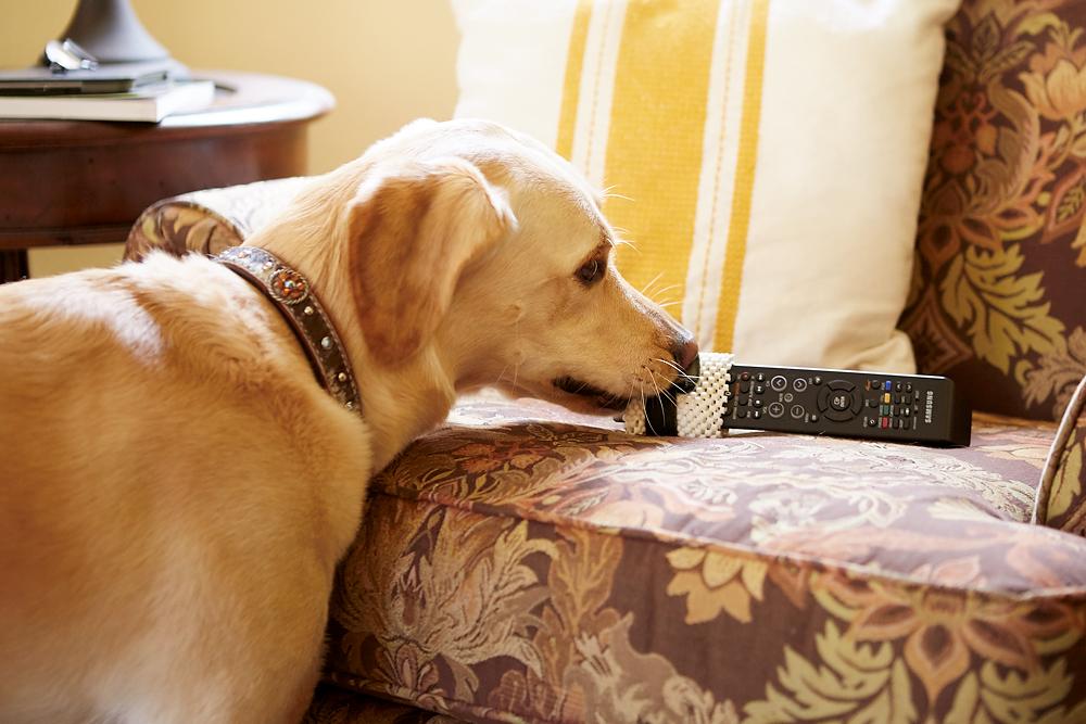 dog getting remote control
