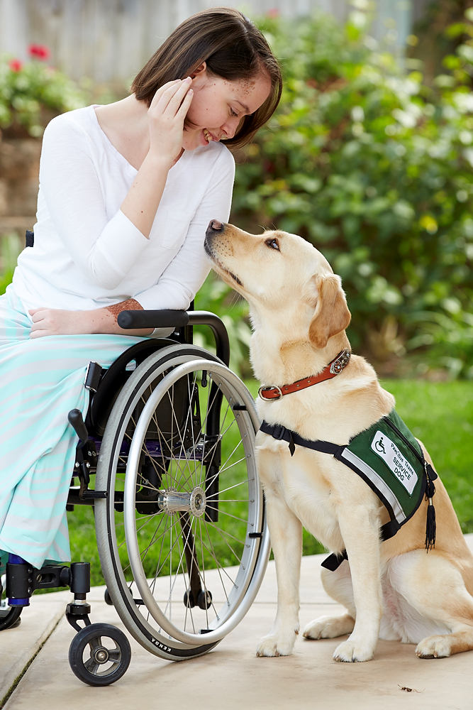 service dog with wheelchair